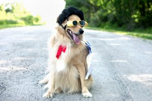 Dog wearing sunglasses and Elvis wig